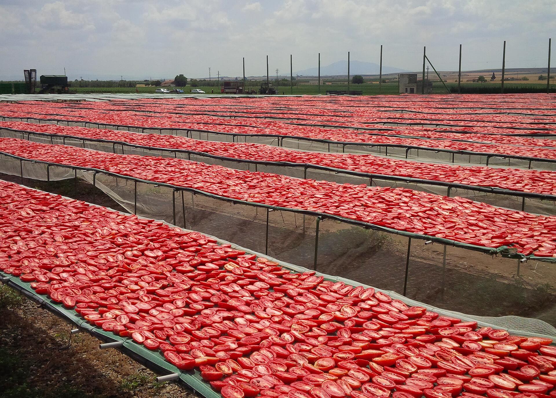 Tomaten getrocknet Produktion