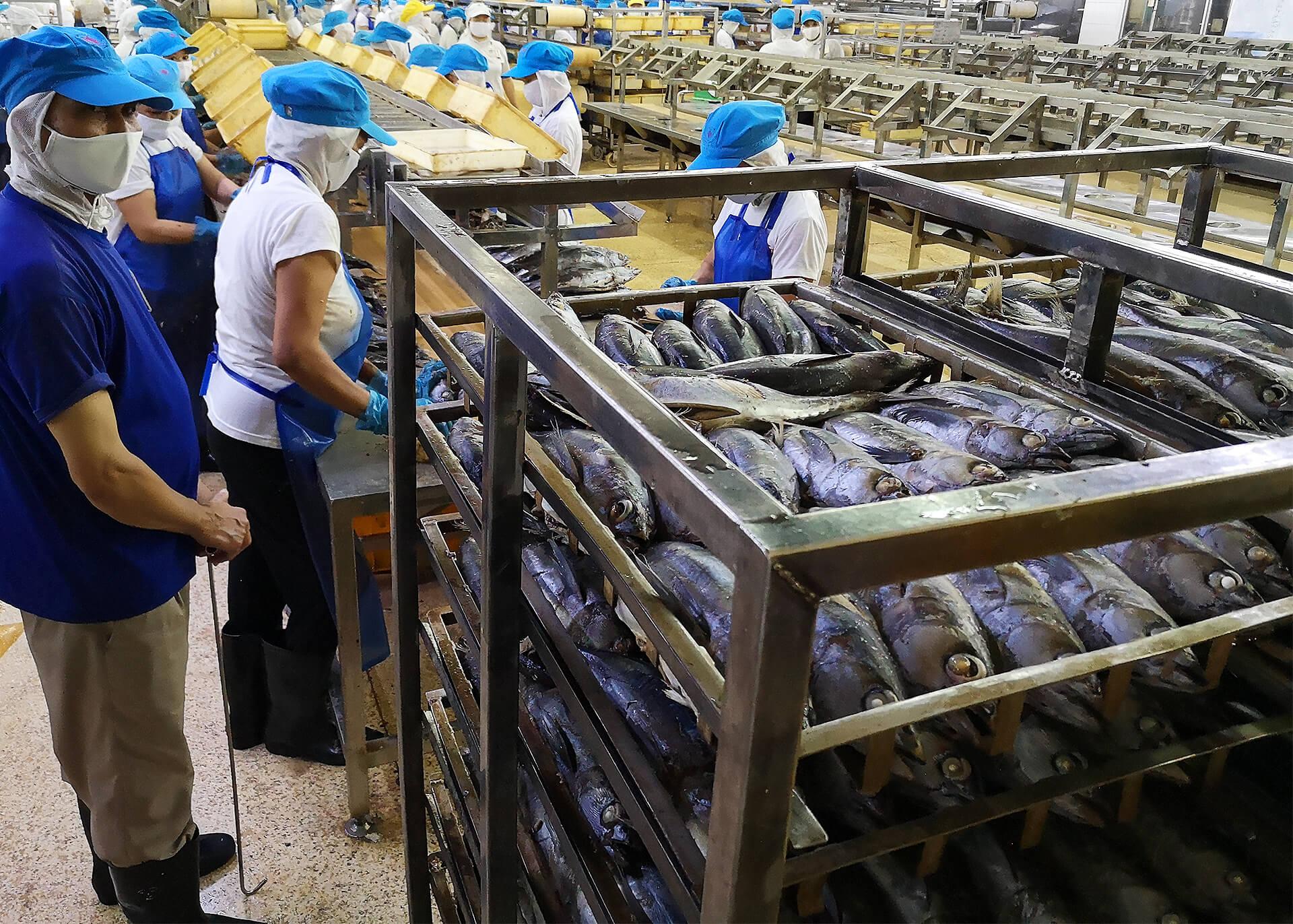 Thunfisch Produktion